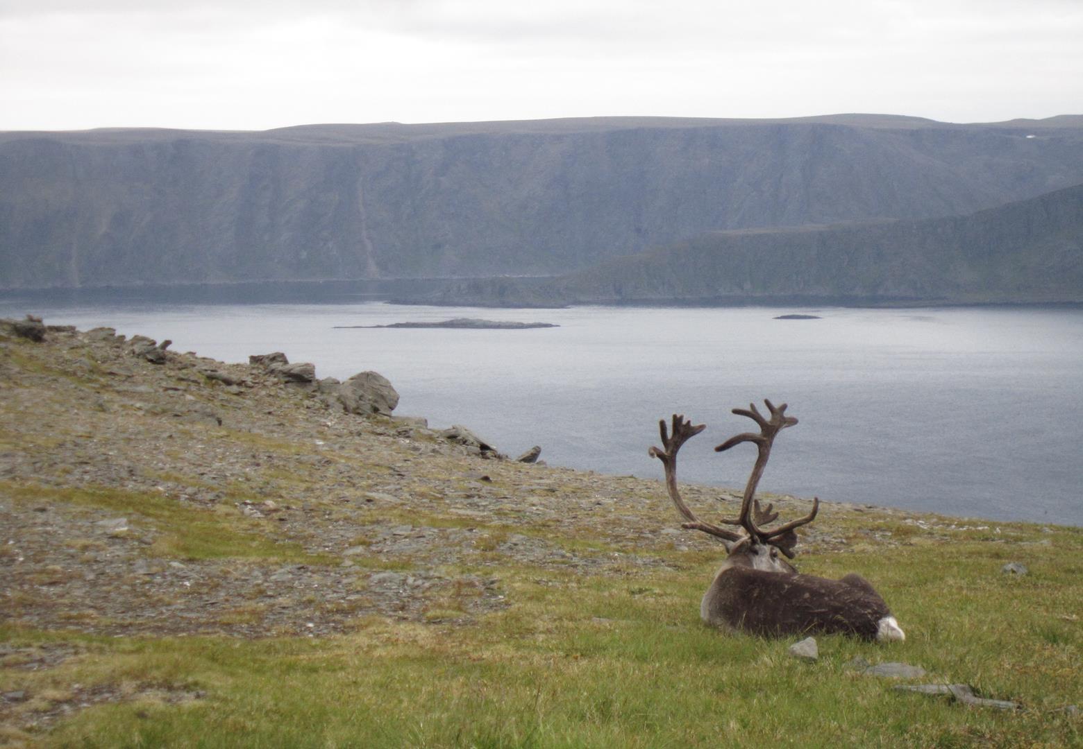 Belleza animal en el fiordo