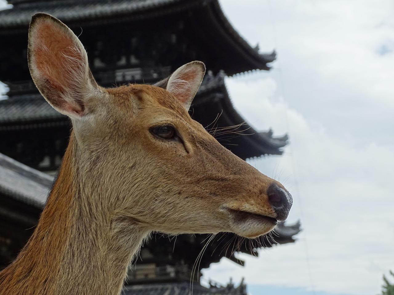La tranquil.litat del Japó