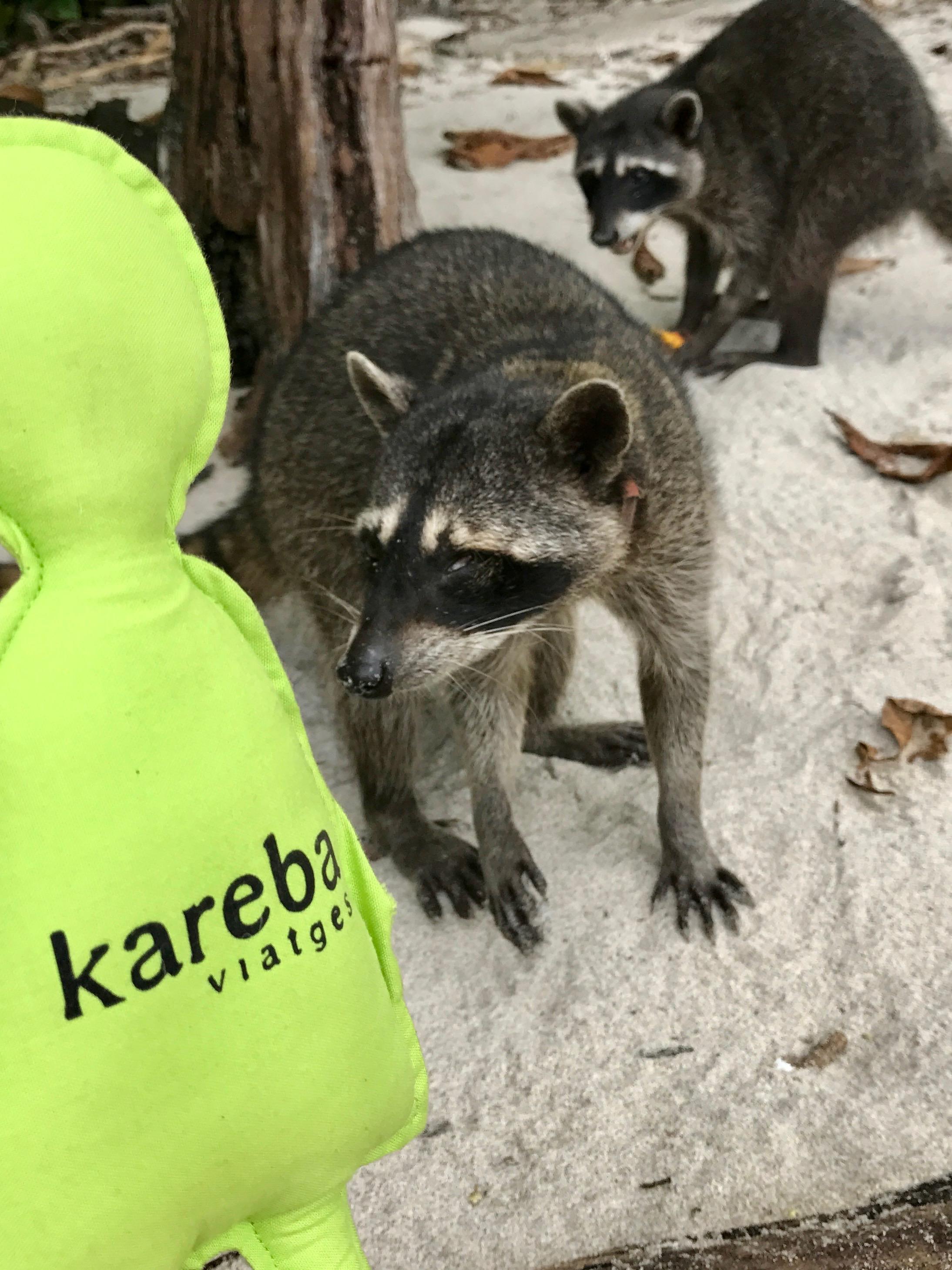 El Karebo fent amics