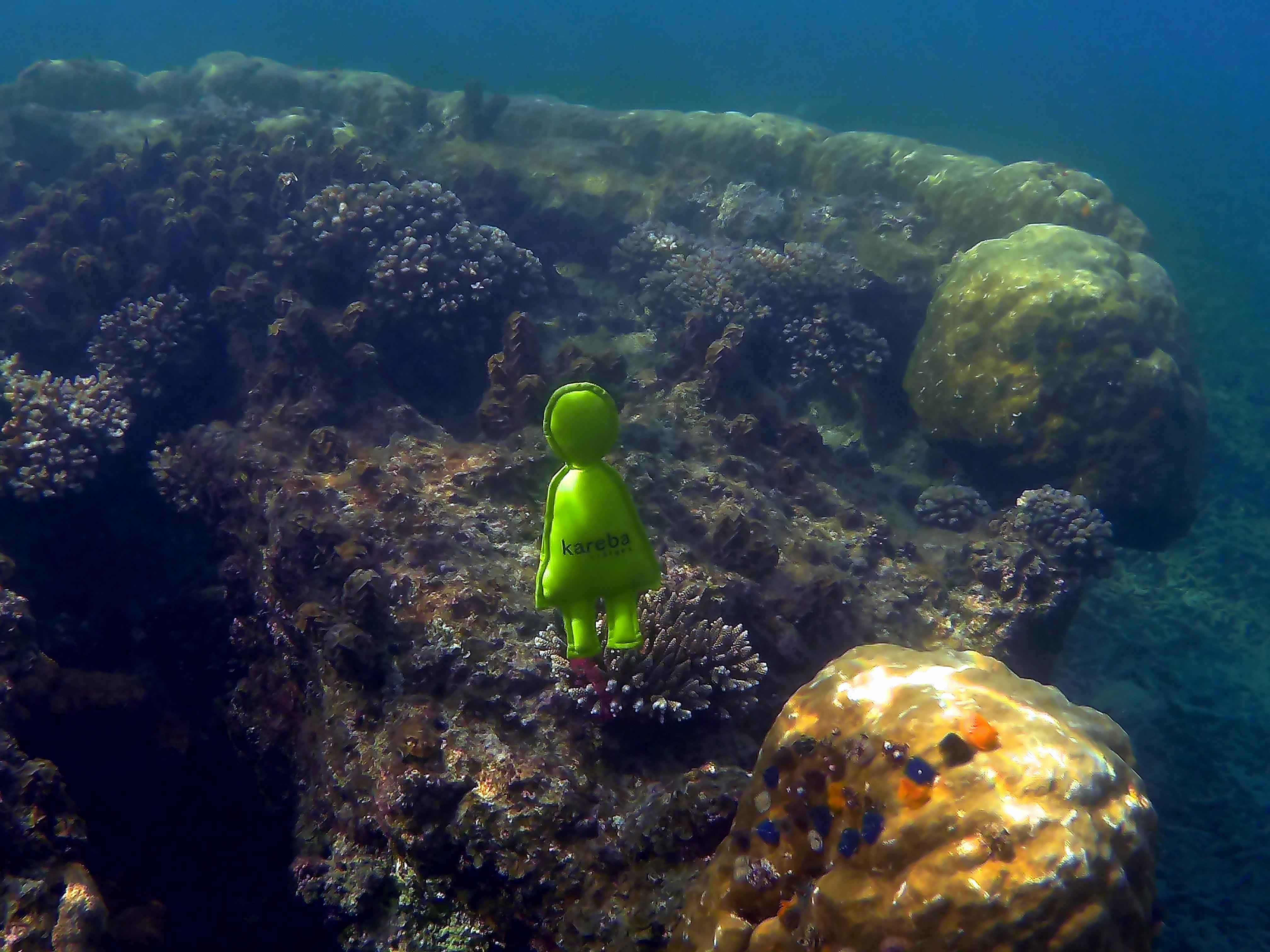 Karebo diving
