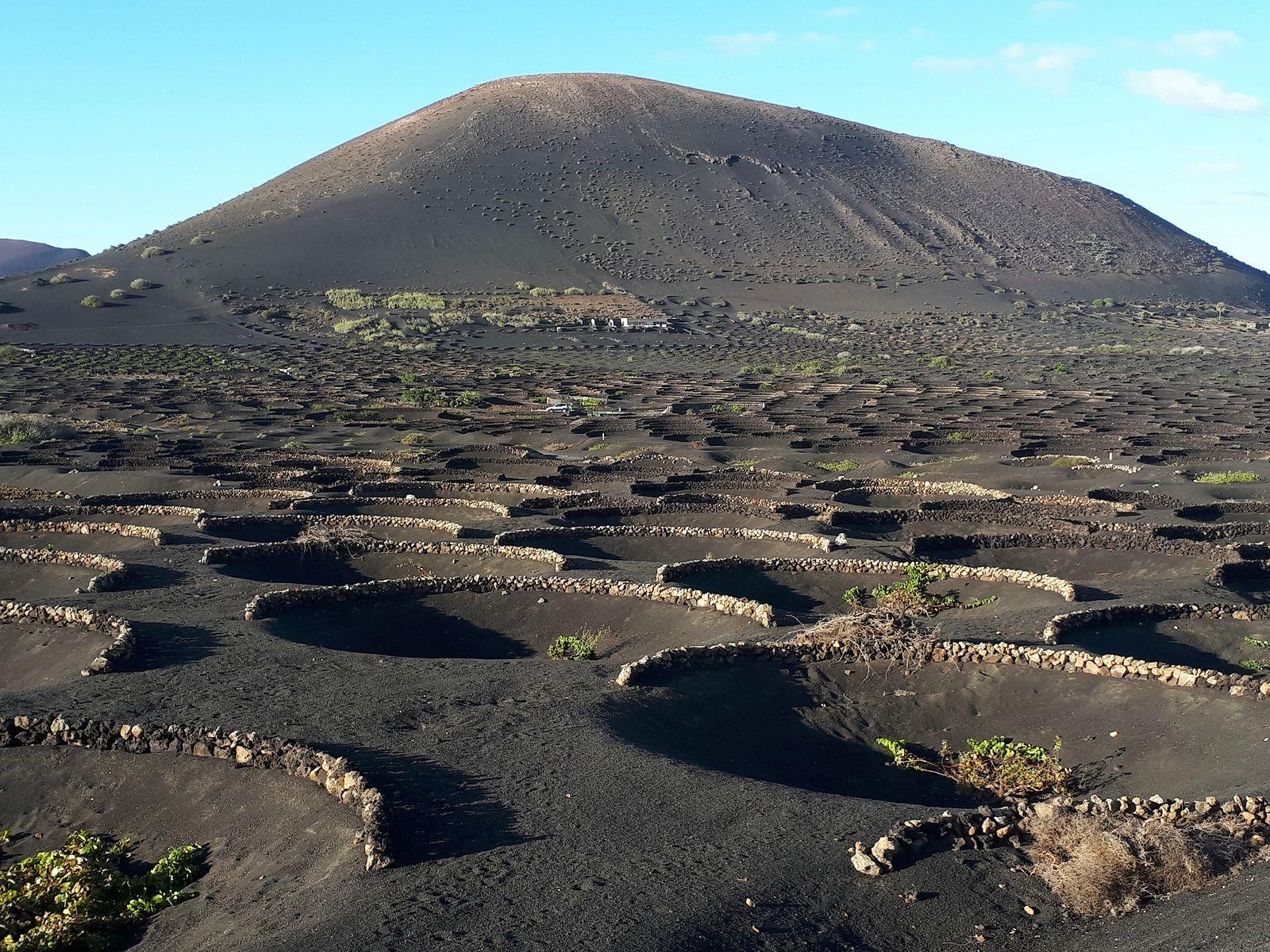 los sabrosos caldos de malvasia(Lanzarote)