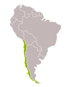 Xile + Illa de Pasqua