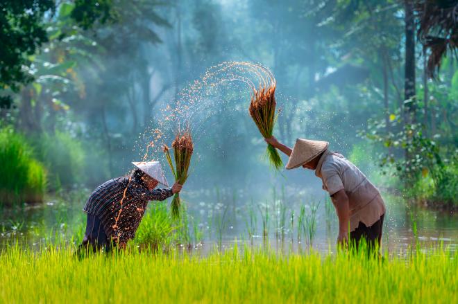 Cambodia y su naturaleza